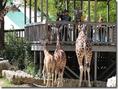 10.3.09 Zoo Trip (7)
