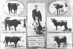 Joselito y los 6 toros de V Martinez 001