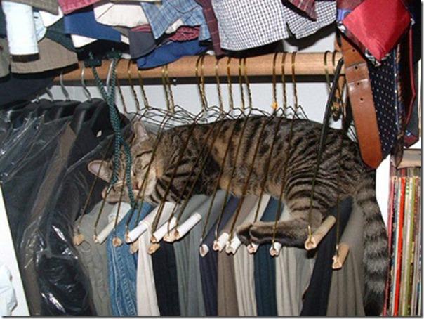 gatos divertidos patatitasylimones (16)