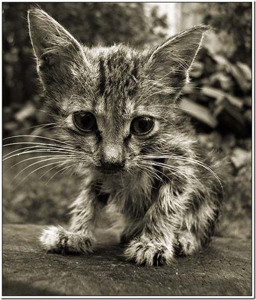 gatos divertidos patatitasylimones (18)