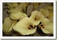 bloemen 004