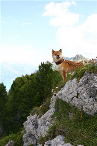 PÃ¥ udkig i bjergene i Schweiz