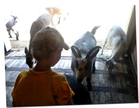 Colin meets a goat