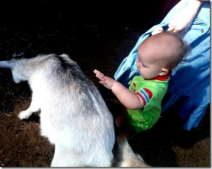 Nikolai pets the goat
