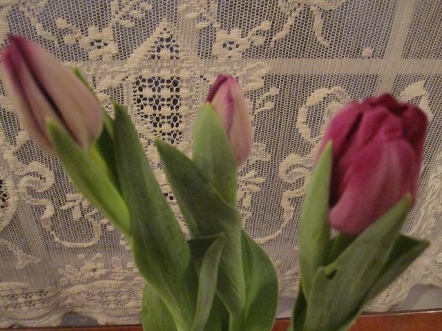 Valentine 059