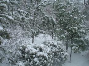 Snow 2009 049
