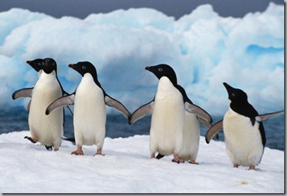 penguins_dancing