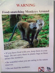 Food Snatching Monkeys around!