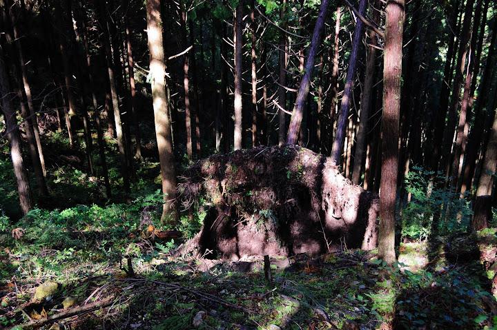 三ツ瀬明神山2合目手前の倒木の写真