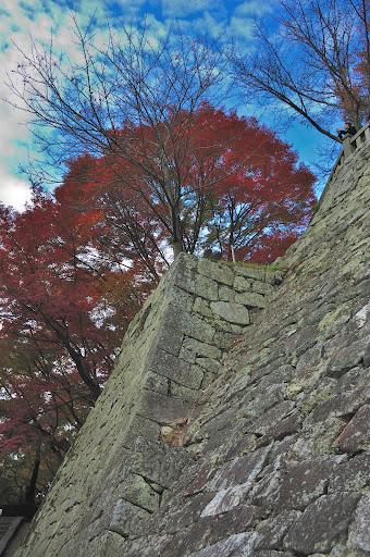 清水の舞台横の石垣の上の紅葉の写真