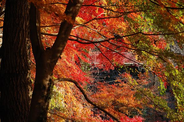王滝渓谷の紅葉と歌石園地のつり橋の写真