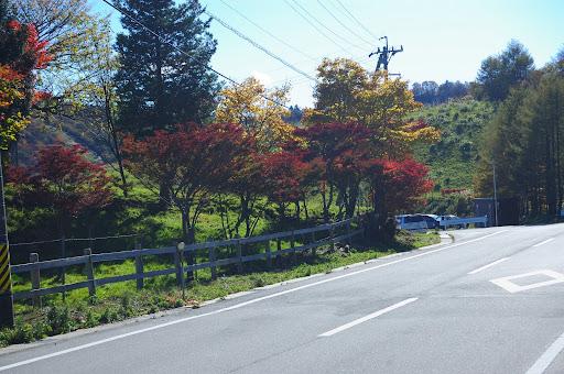 茶臼山高原周遊道路の紅葉の写真