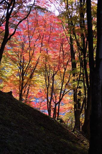 香嵐渓・飯盛山下りの紅葉の写真