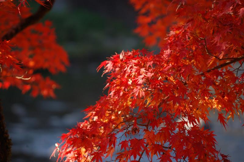 足助・香嵐渓の紅葉と巴川の写真