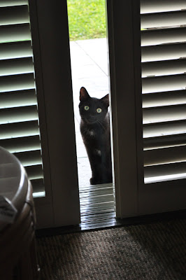 Little black resort kitty wants to come in. Hapuna Beach Prince Resort. Photo by Lisa Callagher Onizuka