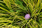 Pink Easter egg waiting in the grass