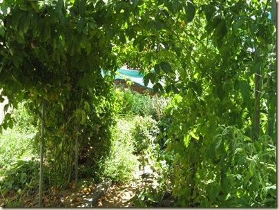 Garden Wrap 023