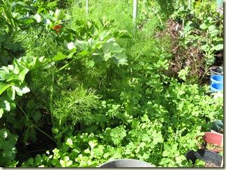 Garden 033