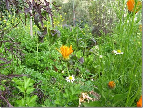Spring Garden-83
