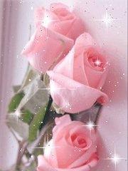 [pink roses[2].jpg]