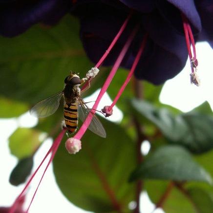 insectmacrobypublicenergy