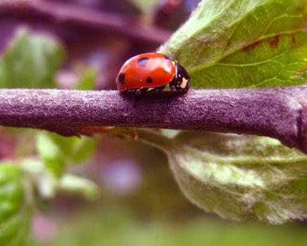 insectbytheredgirl