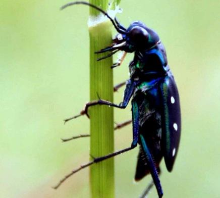 insectbydigantatalukdar