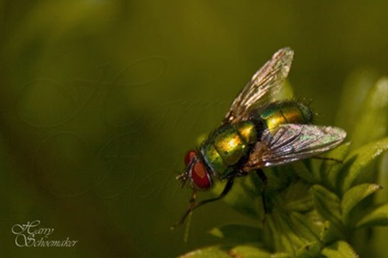 insect03byharryschoemaker