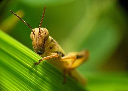 shyhopper