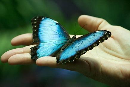 butterflyinhand