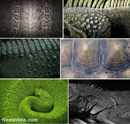 Texturas de reptiles