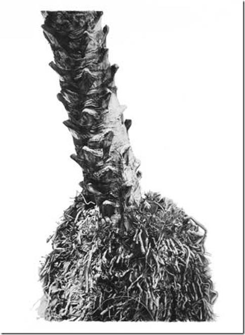 palmroots_synapse
