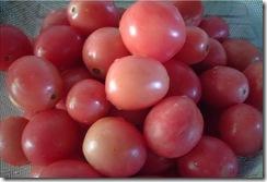 Seeda Tomato