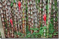 tigerbamboo
