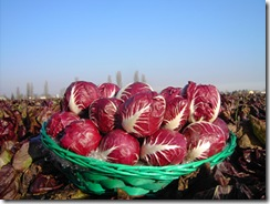 radicchio di verona
