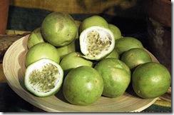 Passiflora maliformis1