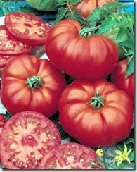 Tomate Marmande