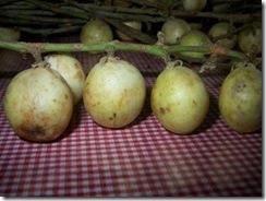 Baccaurea dulcis2
