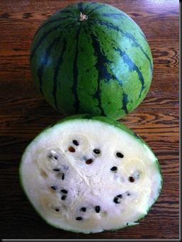 Saskatchewan-watermelon