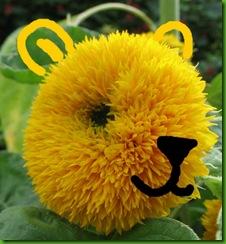 Sunflower Tedy Bear1