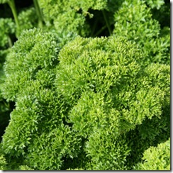 Parsley Triple Curved