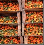 Boumalne_du_Dades,_Oranges