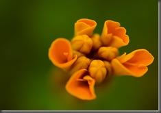 Orange_Candy__by_DafoeofLenin