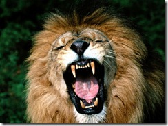 roaring-lion1
