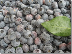 Blueberry pie, bolo 003