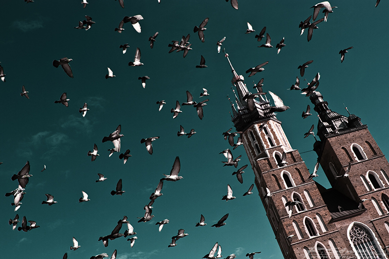 Kraków, Rynek. Główna atrakcja krakowskiego rynku - gołębie. A z tyłu... to chyba jakiś dom.