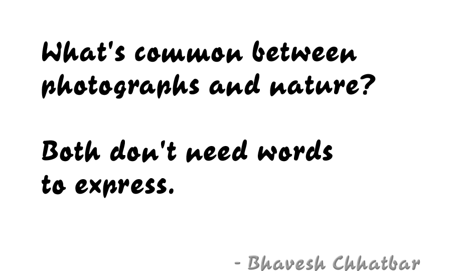 What's common between photographs and nature? Both don't need words to express. - Bhavesh Chhatbar