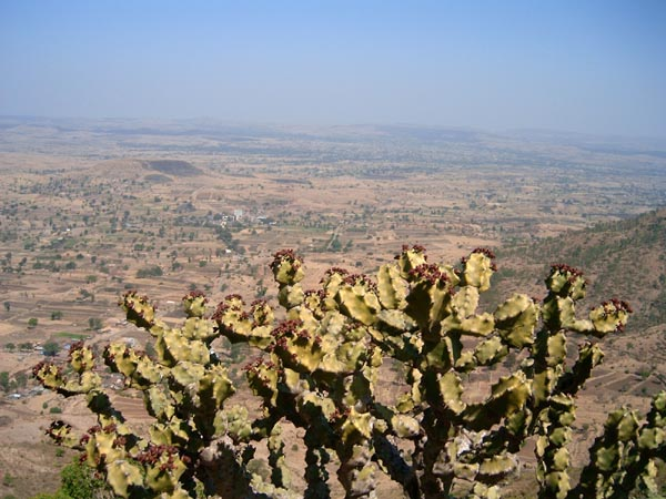 Now cactii rule the Purandar Fort