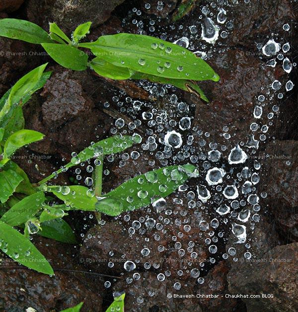 Diamonds found in Tamhini ghat