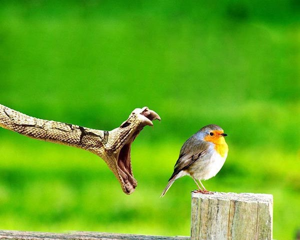 Innocent looking bird being hunted by snake